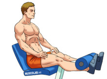 Gambe-Leg-extension
