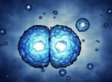 proliferazione-cellule-staminali
