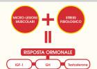 Infografica-Massa-Muscolare